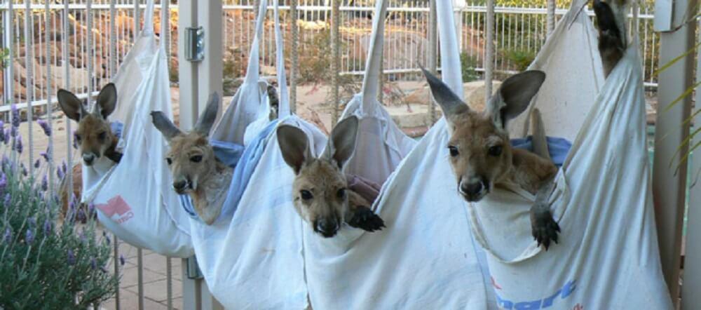 Phillip Island Wildlife Clinic