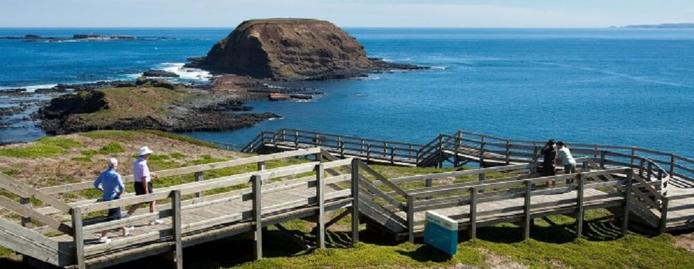 The Nobbies – Explore Phillip Island