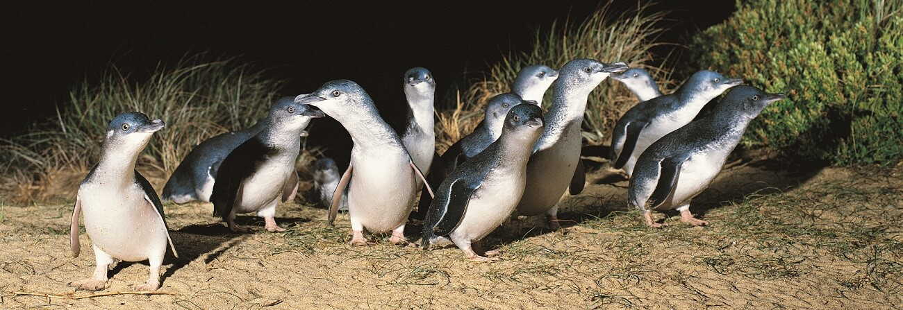 What is the best time of the year to see the penguins?
