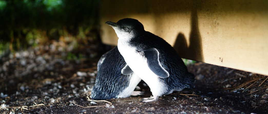 Why you shouldn't snap photos of the Penguins?