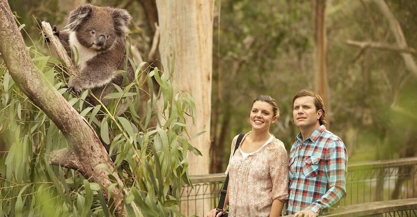 Phillip Island Day Tour - Koala Reserve